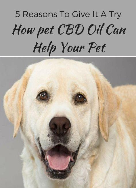 Essential CBD Extract for Pets - สุขภาพสัตว์ลดลง - การเรียนการสอน - ดี ไหม - pantip