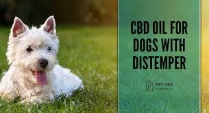 Essential CBD Extract for Pets - สุขภาพสัตว์ลดลง - สั่ง ซื้อ - ราคา เท่า ไหร่ - lazada