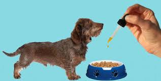 Essential CBD Extract for Pets - ข้อห้าม - รีวิว - ของ แท้